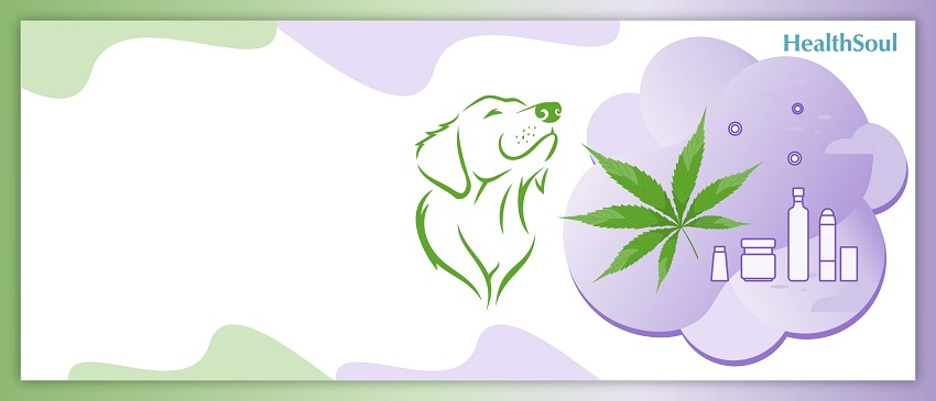 CBD Oil For Skin Conditions Suffered By Dogs | HealthSoul