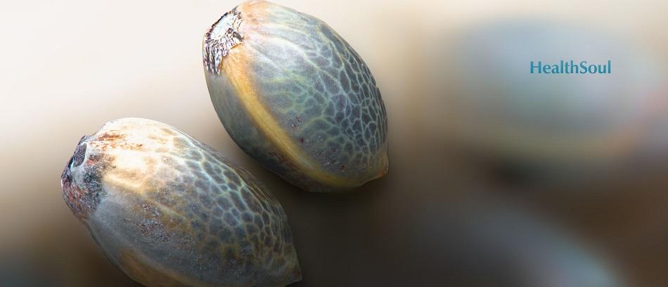 Hemp seed | HealthSoul