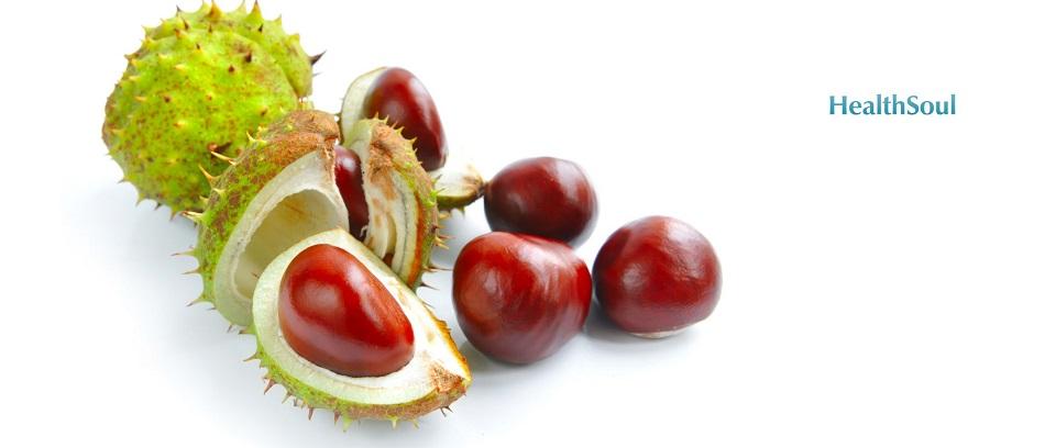 Horse chestnut Benefits | HealthSoul