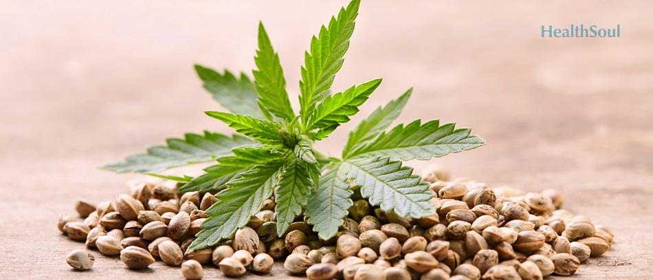 The benefits of marijuana   HealthSoul