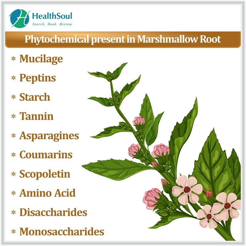 Phytochemical present in Marshmallow roots
