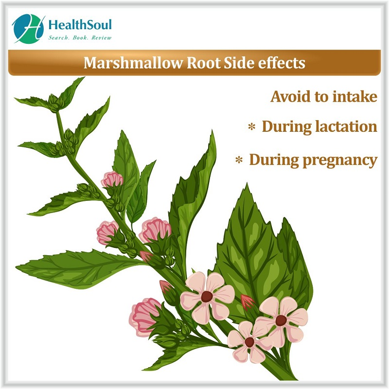 Marshmallow root side effects
