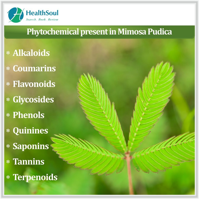 Phytochemical present in Mimosa pudica