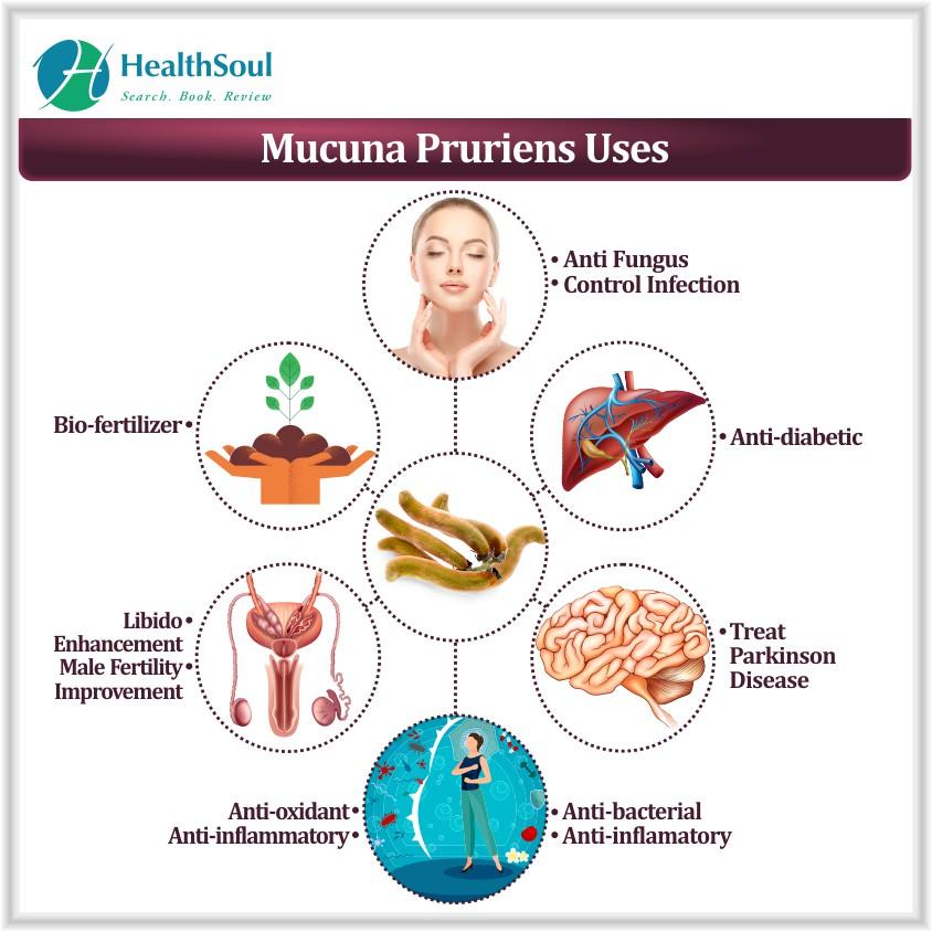 Mucuna Pruriens Uses