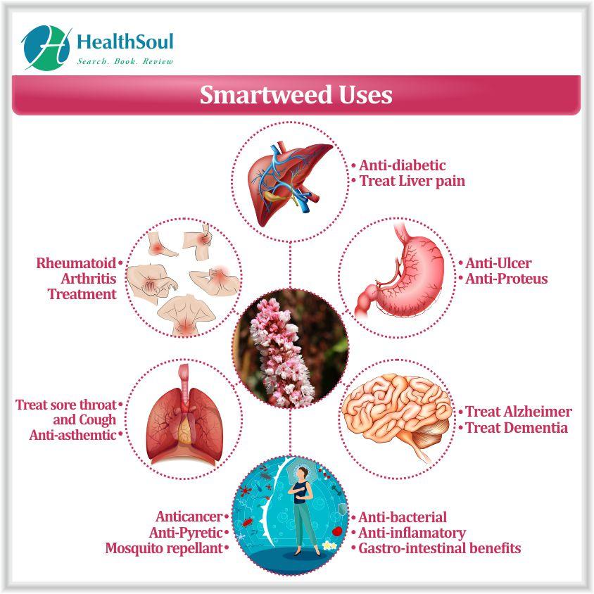 Smartweed Uses