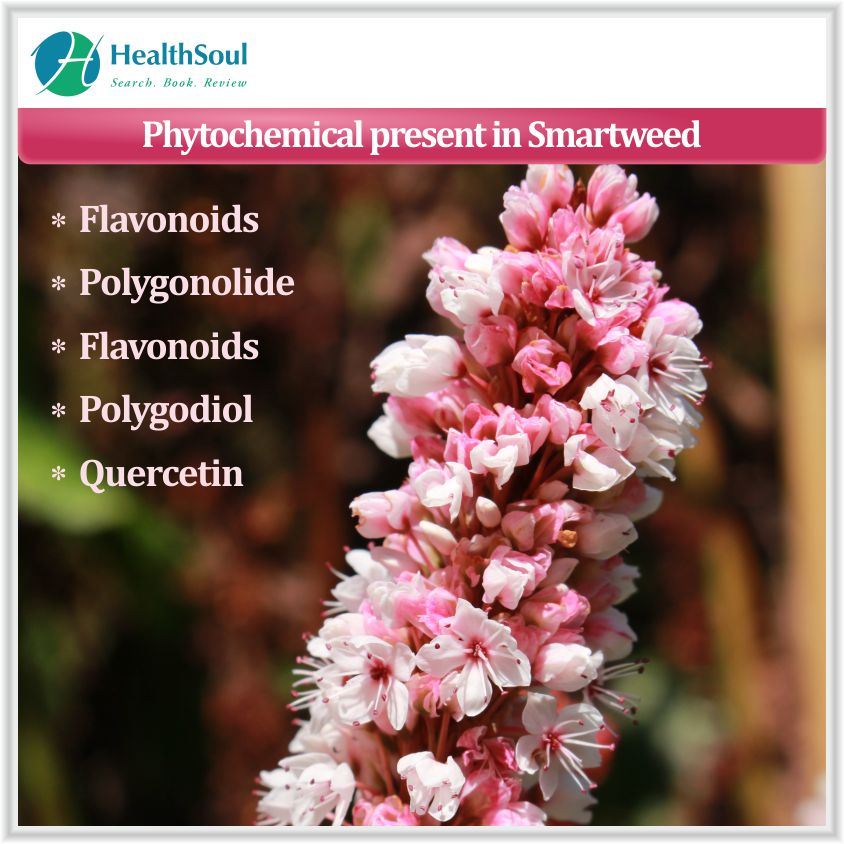 Phytochemical present in Smartweed