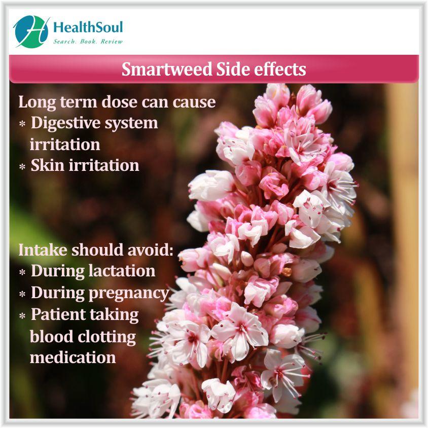 Smartweed side effects