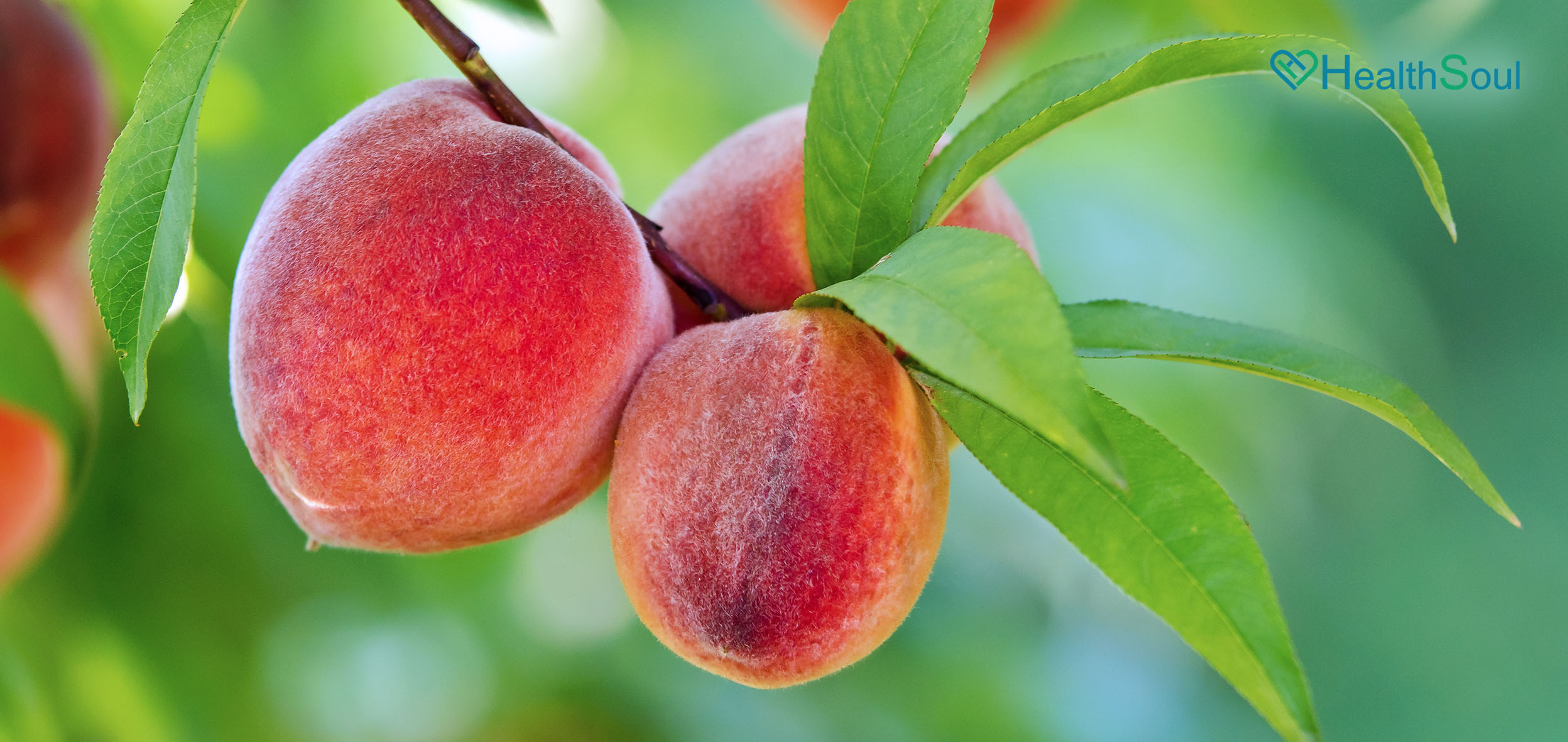 Health benefits of peaches | HealthSoul