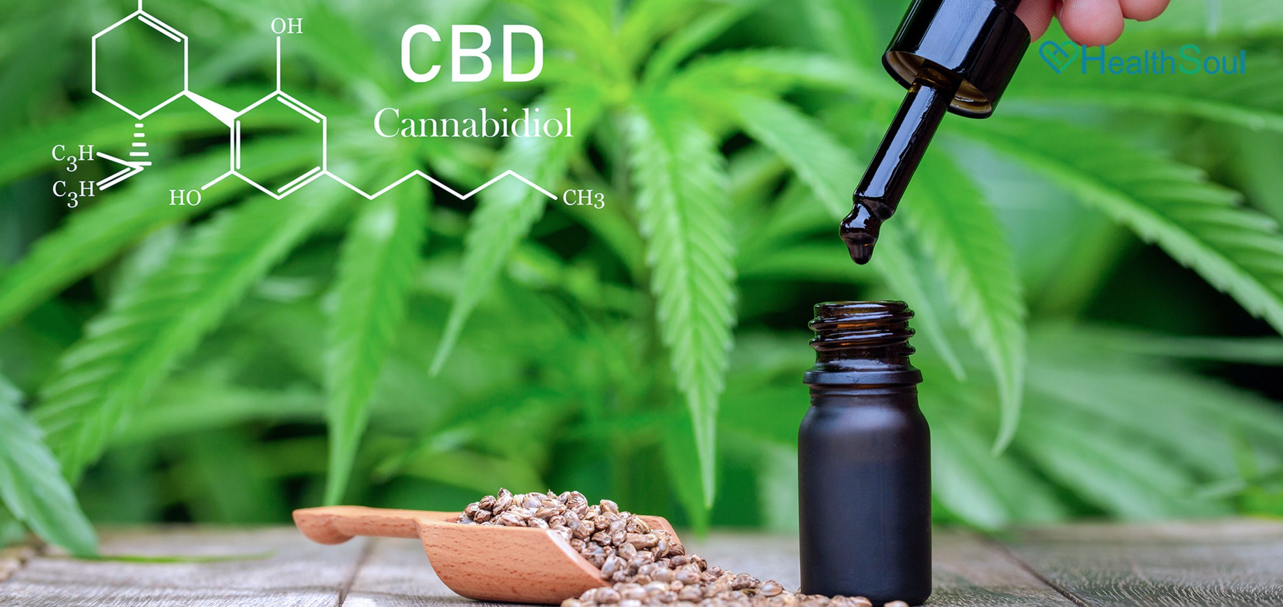 What is CBD - What Are its Benefits   HealthSoul