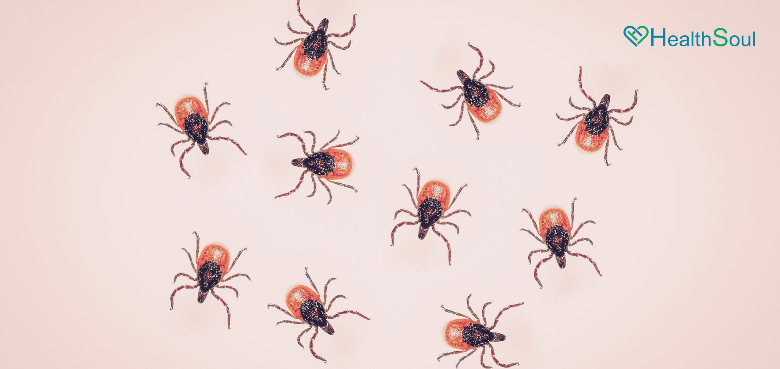 Expert-Approved Ways to Get Rid of Ticks Around Your Home | HealthSoul